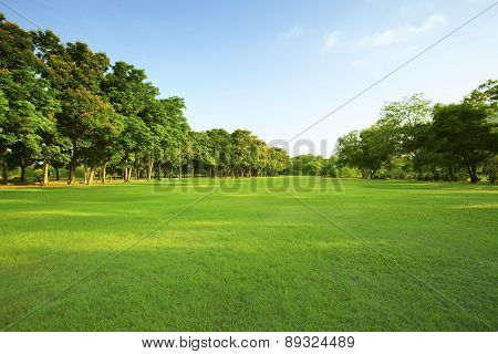 beautiful morning light in public park with green grass field and green fresh tree plant perspective to copy space for multipurpose stock photo