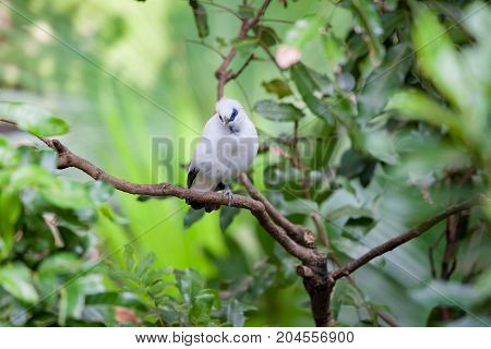 White exotic bird sitting on a branch stock photo
