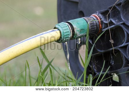 Wasting water in the garden water leaking from a garden hose spigot. Plastic gardening hose with threaded brass fitting connected to water supply valve and pipe. Water dripping between pipe and hose. stock photo