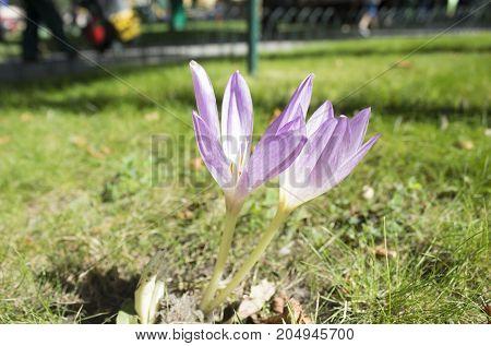 Sunday Morning Garden Chat Iris The Rainbow Flower Balloon Juice