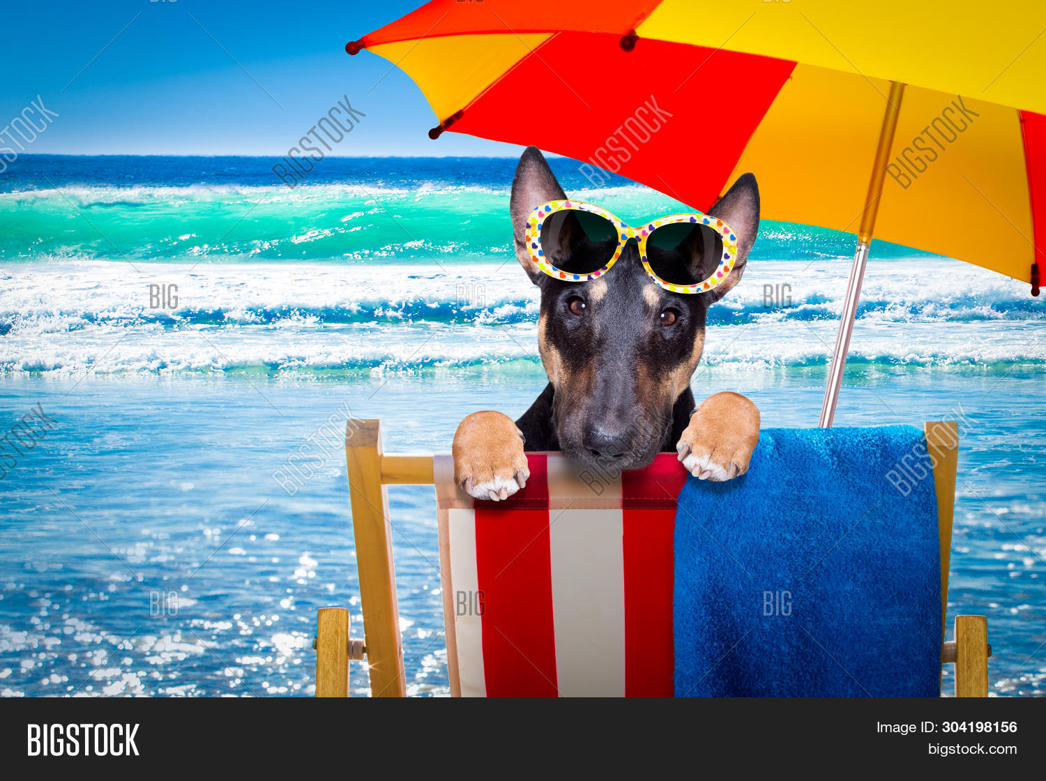 Bull Terrier  Dog Resting And Relaxing On A Hammock Or Beach Chair Under Umbrella At The Beach Ocean
