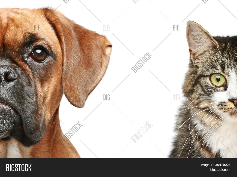 Dog And Cat Half Of Muzzle Close Up Portrait 30479228 Image Stock Photo