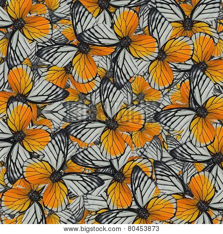 Exotic of Great Yellow Background Pattern made of Red-spot Sawtooth Butterflies stock photo