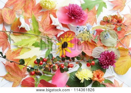 Beautiful flowers and leaves for botanical background stock photo