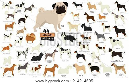 Breeds of dogs Isolated objects set Vector