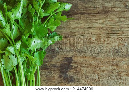Green leaves coriander lay on wood table in top view flat lay with copy space. Food preparation concept for fresh vegetable. Cilantro leaves or coriander is famous vegetable for increase food flavor. Fresh coriander or cilantro ready to use.