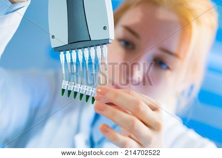 using a multi channel pipette for pcr  processing in microbiological laboratory stock photo