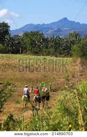 Horse Riders In Valle De Los Ingenios, Cuba