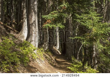 A path leading into a thick woods where all the tree trunks are curved to the right at the base.