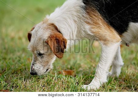 The very hungry dog with sad eyes stock photo