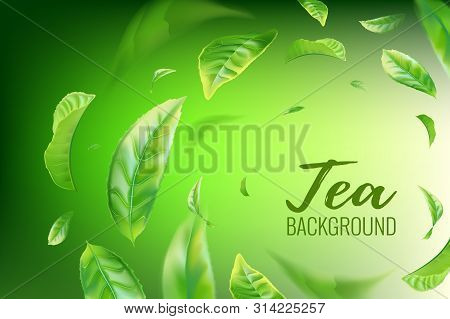Realistic green tea leaves background for advertising poster. Vector illustration stock photo