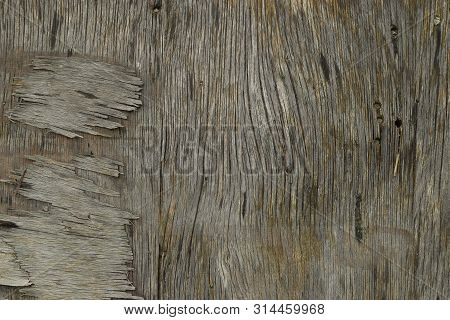 Old weathered piece of wood with splinters. Background texture. stock photo