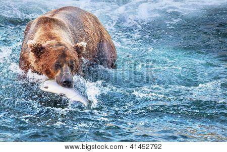 Pêche des ours en alaska