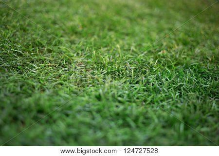 artificial grass. artificial grass. artificial grass.artificial grass\\ ** Note: Shallow depth of field