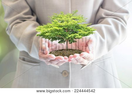 Sustainable eco friendly business investment concept in environment conservation and corporate social responsibility csr campaign with tree planting growing development in businessman's hand