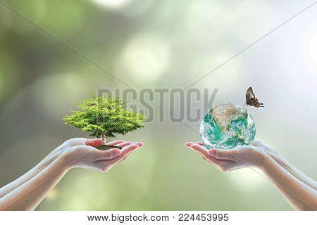 World environment day, nature environmental protection concept with two human hands balancing tree planting growth and saving earth on natural background greenery for Arbor day, reforestation conservation csr with people, peace campaign.  Element of this