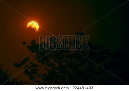 Astrophotography close-up shot of lunar eclipse as Blood Moon with a dark tree in the foreground and dark red sky night in the background. stock photo