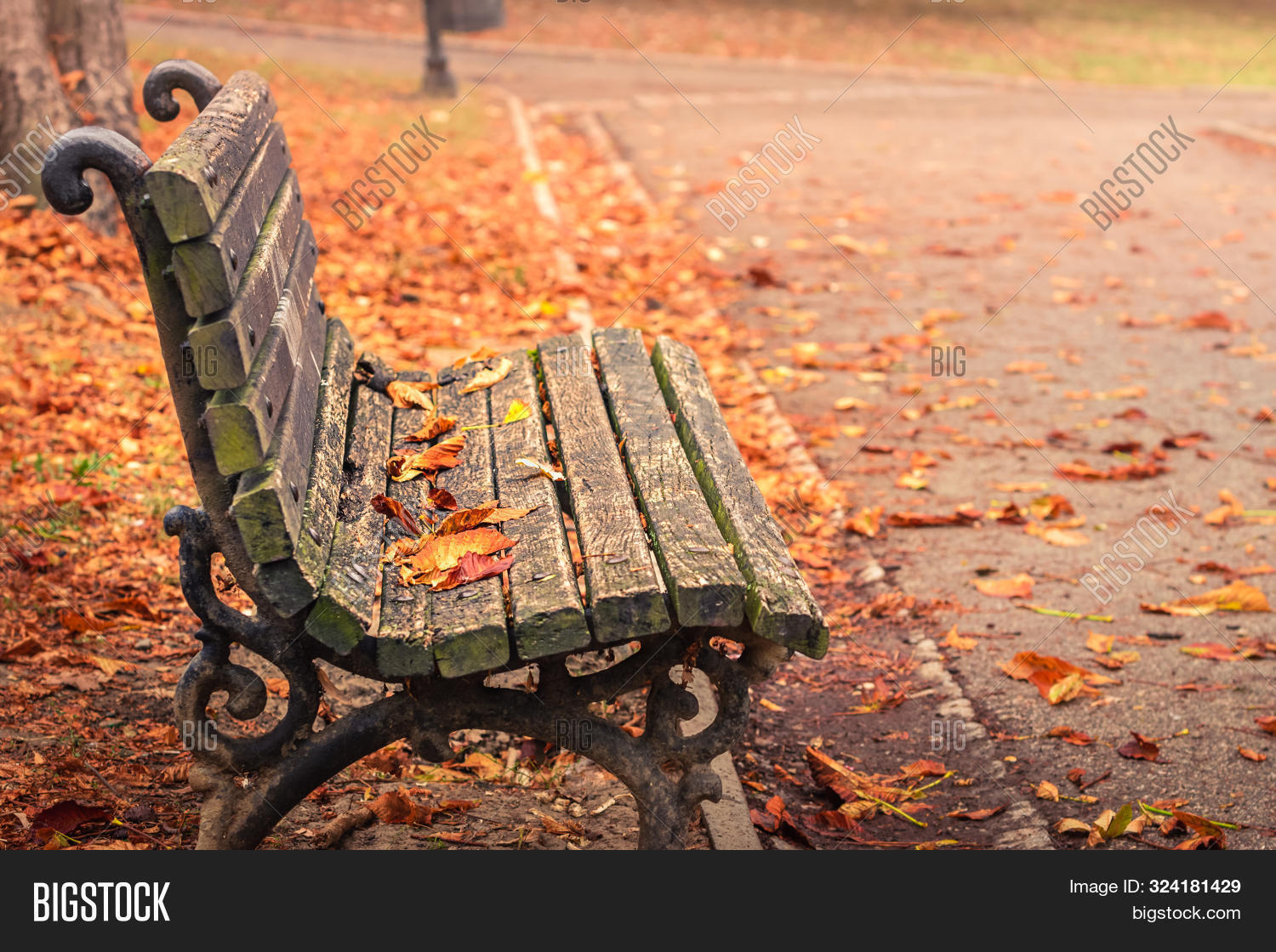 autumn,autumnal,background,beauty,brown,central,city,colorful,colors,colour,enjoyment,fall,focus,foliage,freshness,grass,idyllic,landscape,leaf,leaves,leisure,lush,meditating,nature,no,october,old,orange,outdoor,park,people,public,red,relaxation,rusty,season,seat,september,silence,solitude,tranquility,trees,urban,vintage,walk,walking,wooden,yellow