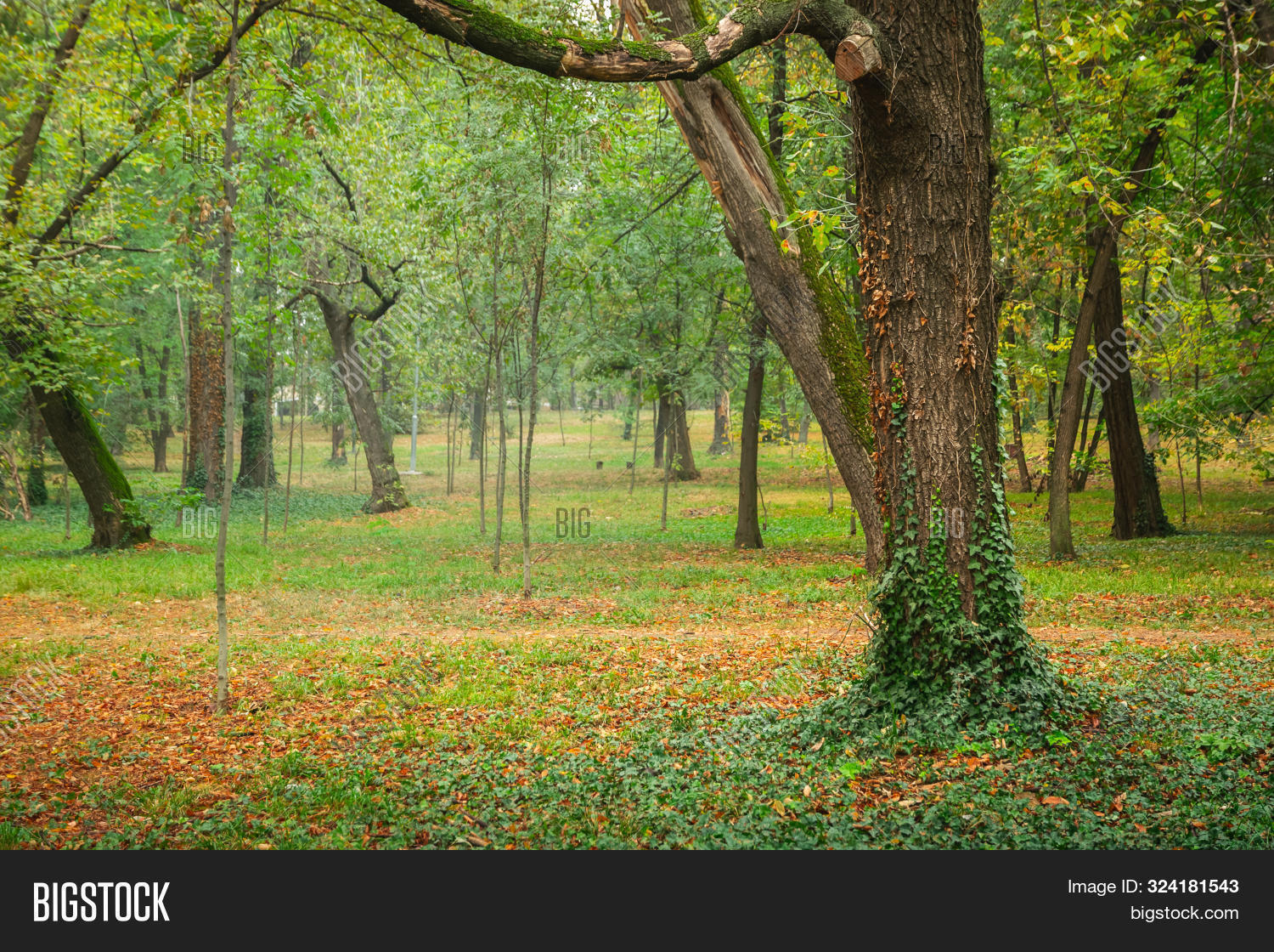 autumn,autumnal,background,beauty,botany,branch,central,city,colorful,colors,creeper,day,daylight,enjoyment,eve,fall,focus,foliage,forest,freshness,grass,green,horizontal,landscape,leaf,leaves,lush,meditating,nature,no,october,orange,outdoor,park,people,perspective,public,red,relaxation,solitude,tranquility,tree,trunk,urban,walk,walking,yellow