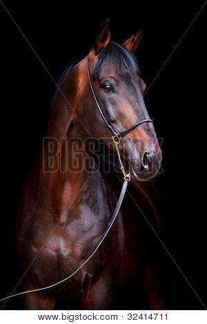 Bay horse head isolated on black background.-Lg Fridge Magnet Skin (size 36x65)