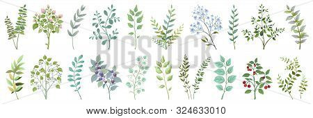 Greenery elements. Leaves branches foliage and berry wedding plants, vintage nature botanical collection. Vector illustrations exotic green garden bouquet on white background for invitation stock photo