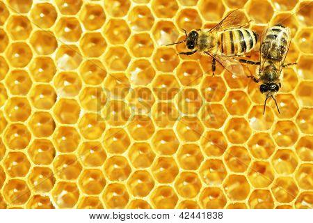 Abeilles travaillent sur les cellules de miel.