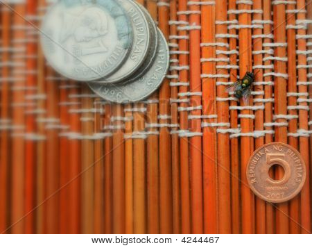 a house fly (drosophila) near a peso and centavo coins laying on a mat. stock photo
