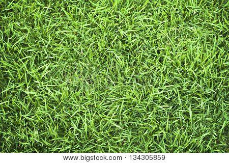 Green grass grass texture grass field grass background