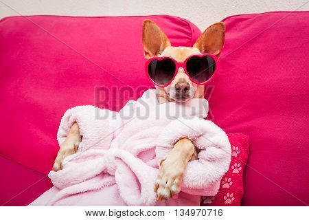 chihuahua dog relaxing and lying in spa wellness center wearing a bathrobe and funny sunglasses stock photo