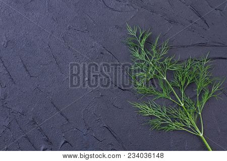 Twig of fresh dill and copy space. Sprig of green aromatic dill on slate, text space. Health benefits of dill. stock photo