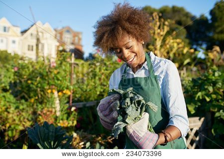 african american woman tending to kale in communal urban garden stock photo