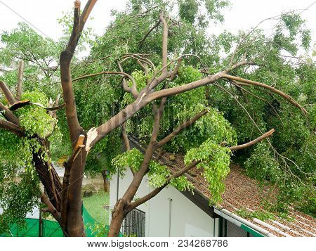 Fallen tree on the roof after big storm stock photo