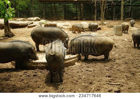 pile of wild boar in pig farm stock photo