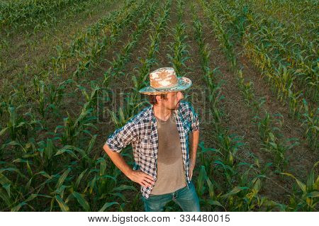 Tired exhausted farmer standing in cultivated sorghum field looking over the crops in his sweaty shirt after hardworking agricultural activity stock photo