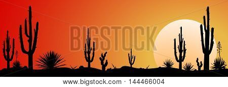 Sunset in the Mexican desert. Silhouettes of cacti and plants. Desert landscape with cactuses.