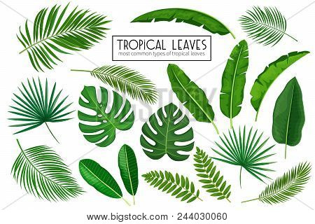 Vector Set Tropical Leaves. Jungle Exotic Leaf Philodendron, Areca Palm, Royal Fern, Plumeria And Et