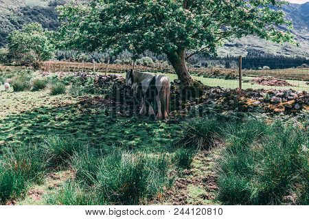 A horse on the scenic fields of Black Valley in county Kerry, Ireland stock photo