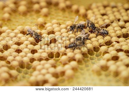 A few bees creep on the honeycombs filled of honey stock photo