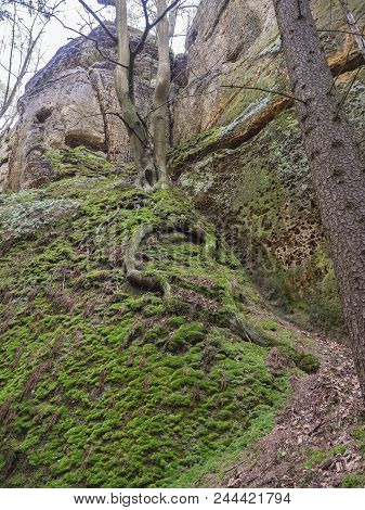 moss covered stones and sandstone rocks with oak tree with twisted roots, lush green moss , czech republic, Lusatian Mountains stock photo
