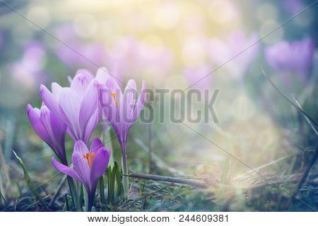 Purple Flowers Background. Beautiful Purple Flowers. Flowers Background For Desktop. Flowers. Purple