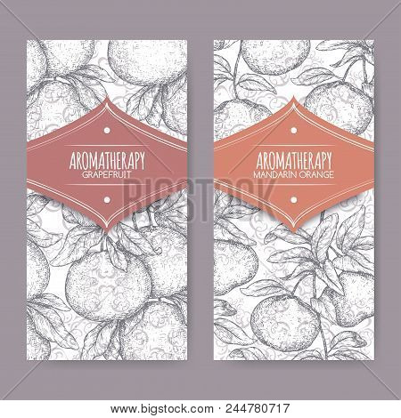 Two labels with citrus paradisi aka grapefruit and citrus reticulata aka mandarin sketch on elegant lace background. Great for traditional medicine, perfume design, cooking or gardening. stock photo