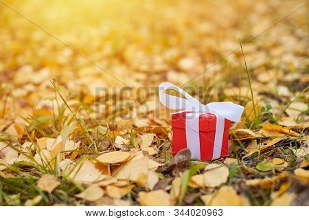 Autumn gift. Gift box in fallen leaves, copy space. Present for a special occasion: anniversary, birthday, wedding, honeymoon, Christmas or Valentines day. stock photo