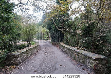 A path on a stone bridge with fallen leaves from the trees. Autumn in a park with the sleeping nature around. Plants background. stock photo