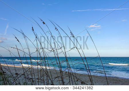 Sea oats  overlooking the beach and ocean on a beautiful sunny day along the shoreline on North Hutchinson Island Florida. stock photo
