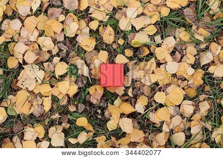 Gift box in autumn leaves, copy space. Gift for special occasion: anniversary, birthday, wedding, honeymoon, Christmas or Valentines day. stock photo