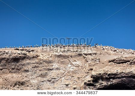 Lot of birds sitting on a cliff against the blue sky, Ballestas Islands, Paracas Nature Reserve, Peru, Latin America stock photo