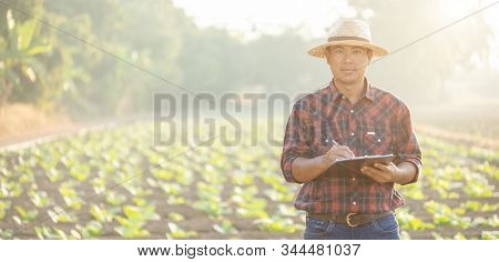Asian young farmer or academic working in the field of tobacco tree. Research or checking the quality after planting tobacco concept stock photo