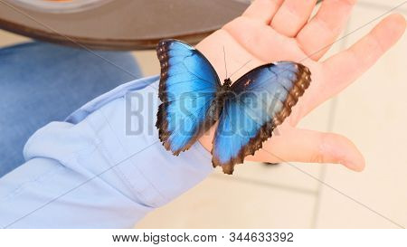 Big blue butterfly sits on a male hand. close-up stock photo