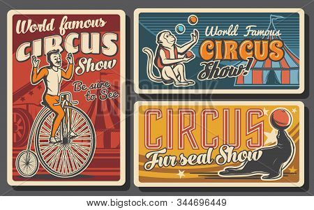 Circus or carnival top tent show retro banners. Vector acrobat riding vintage bicycle, trained animals and rocket man cannon, monkey and seal juggling balls on arena of chapiteau marquee stock photo