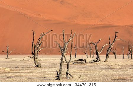 Dead Vlei landscape with dry acacia in Namib desert, valley Sossusvlei, Namibia Africa wilderness stock photo